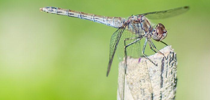 Zo hou je muggen uit de slaapkamer: 4 tips!