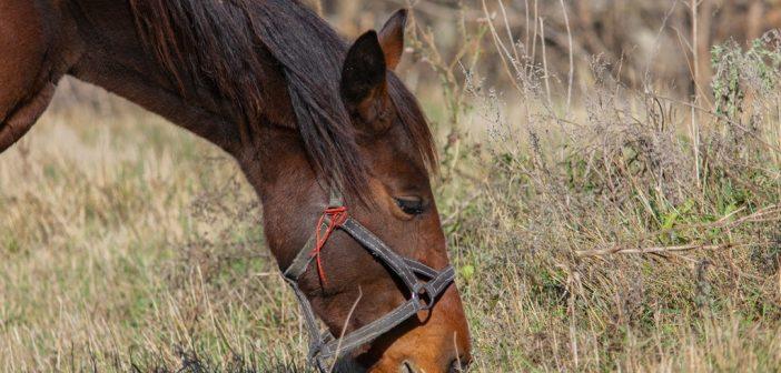 paard aan eigen huis